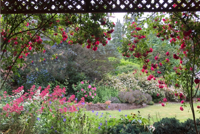 A garden of flowers and lawn viewed from inside a house and framed by a window
