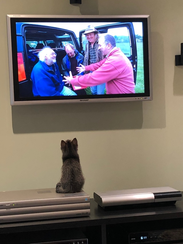 Tiny kitten sitting looking up at a TV showing four men