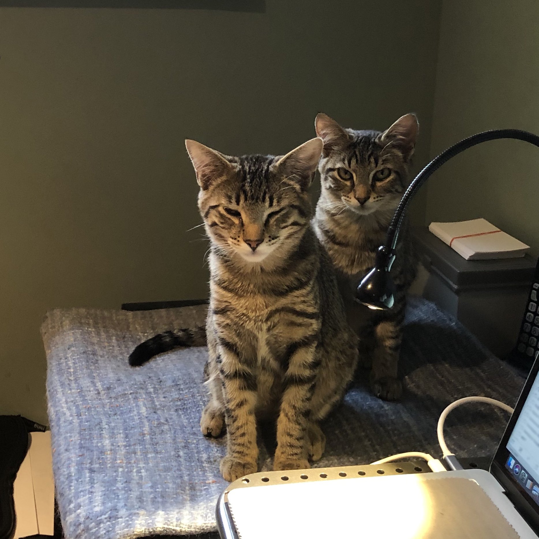 Two tabby cats sitting up after a nap on a woven throw next to a laptop.