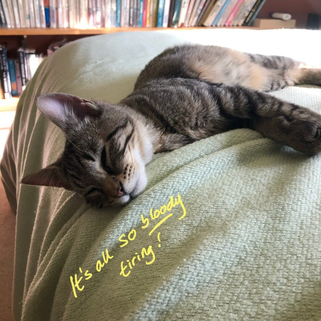 """Tabby kitten stretched out on a green, asleep. Yellow hand-written text reads, """"It's all so bloody tiring!"""""""