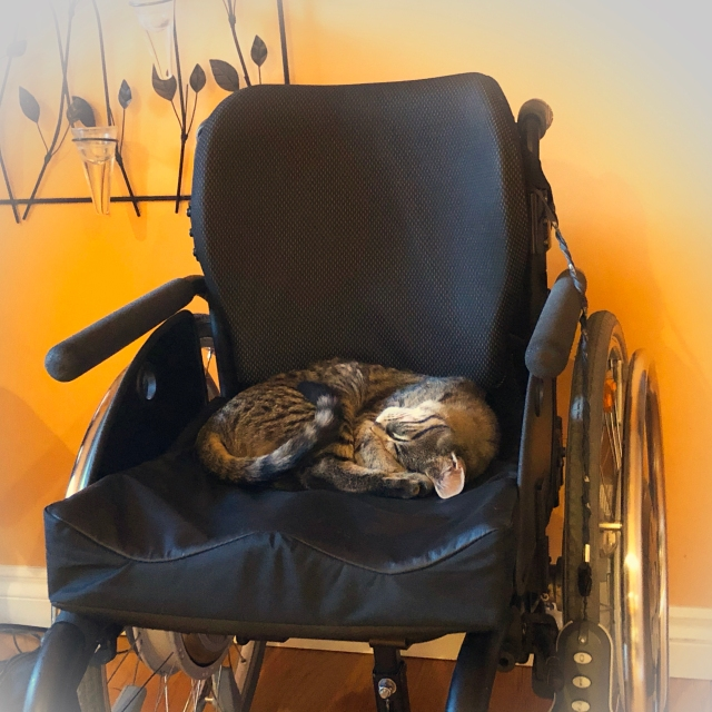 Tabby kitten curled up fast asleep on black wheelchair