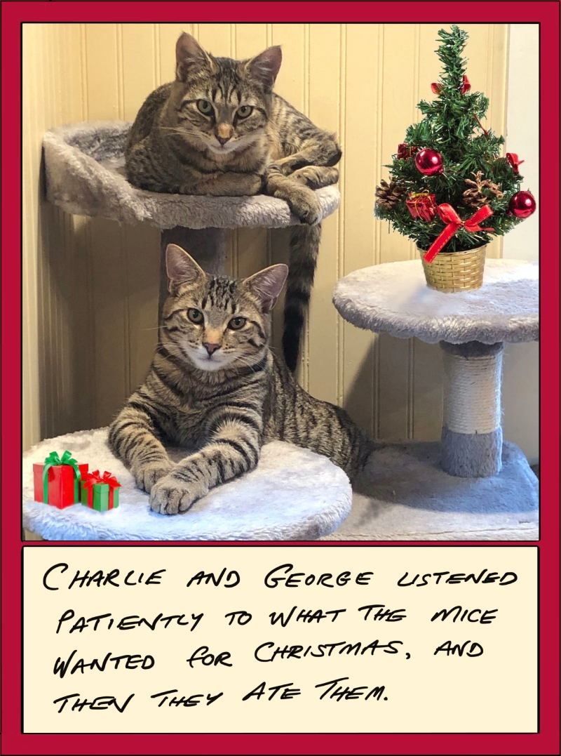 "A Christmas card, in pale yellow with a dark red border. The top two-thirds is a photo of two tabby cats sitting with attentive expressions next to a miniature Christmas tree and wrapped presents. The lower portion is hand-printed text that reads, ""Charlie and George listened patiently to what the mice wanted for Christmas, and then they ate them."""