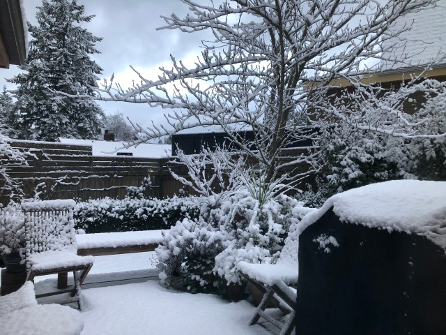 Early morning snow covering a back deck, and benches, and fences, and hedges, and trees...
