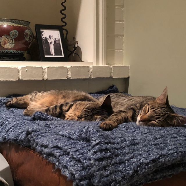 Two tabby cats spooning on a blue throw