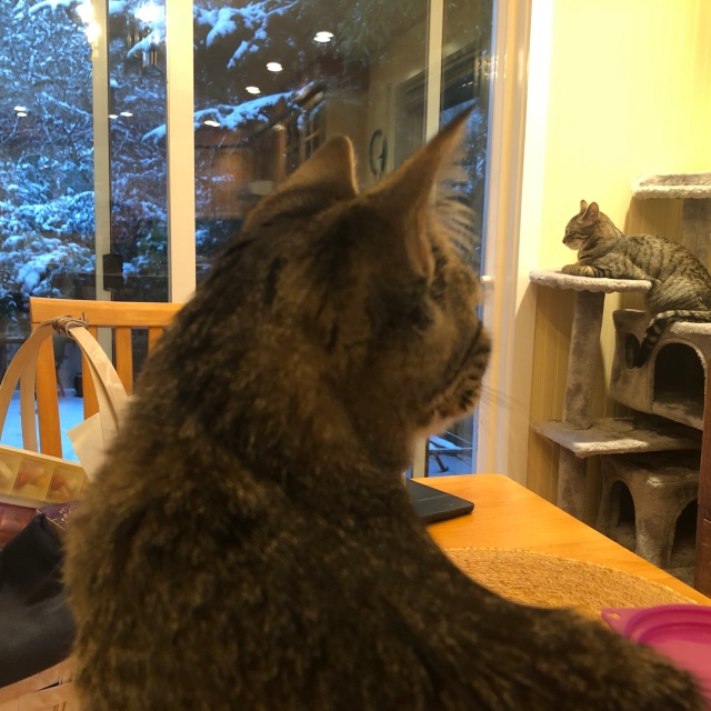 Photo of two cats. One in the foreground watching one in the background who is watching snow fall outside the window.