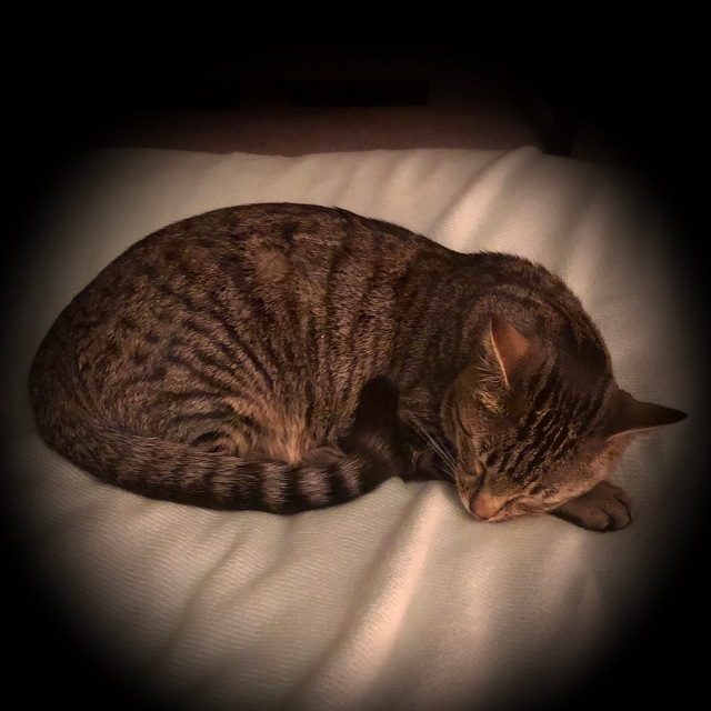 Tabby cat curled up tight and fast asleep on a soft green blanket