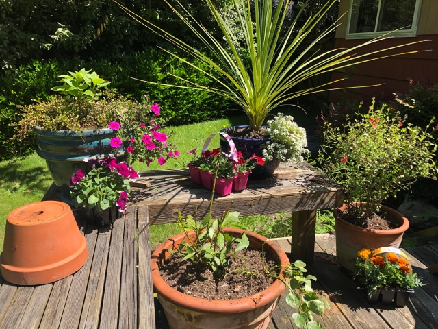 Photo of a garden deck i May with big pots holding very small plants and flowers just waiting to grow...