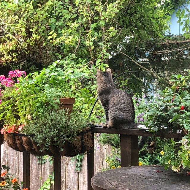 Photo of a cat sitting net to an empty plate and surrounded by herbs and flowers