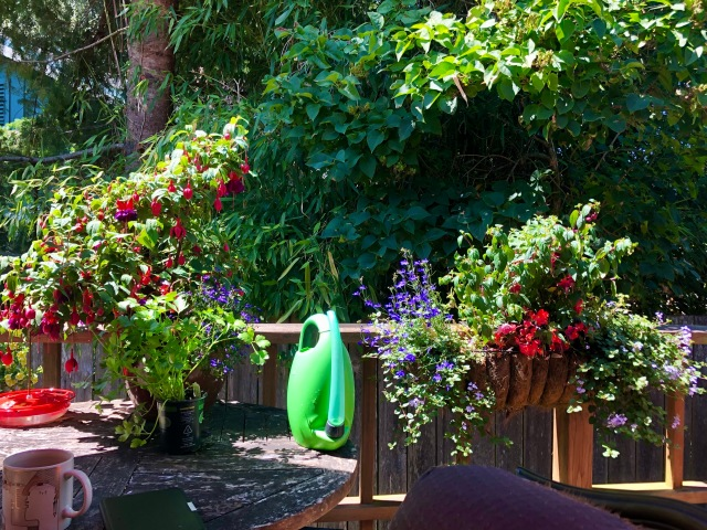 Photo of a deck table and railing with fuschsia and parsley i pots and baskets, and bright green watering can
