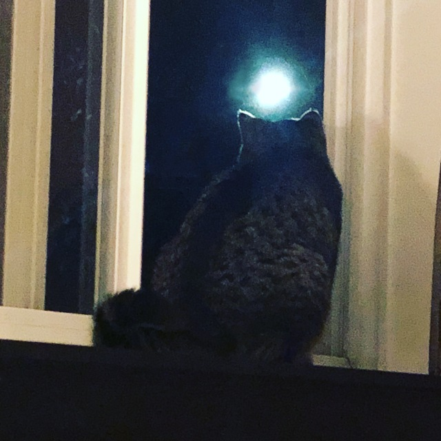 A cat on a window sill gazing at the moon