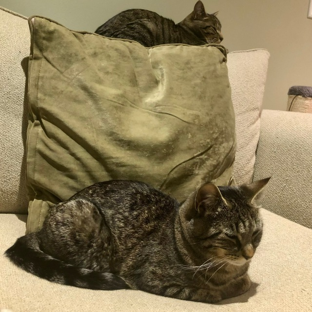 Two cats on a sofa: one sitting along the top, above a cushio, one sitting on the bottom, in front of the cushion