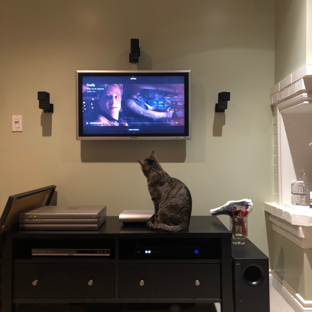 Cat watching TV
