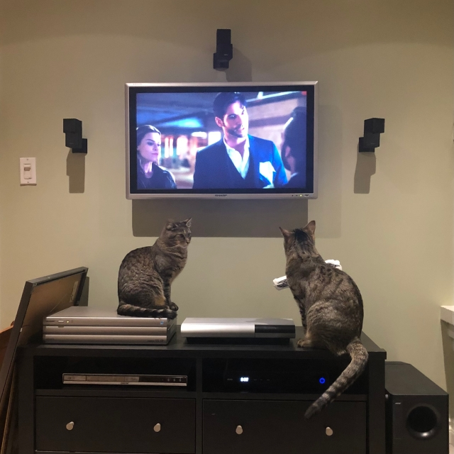 Two cats watching Lucifer on TV