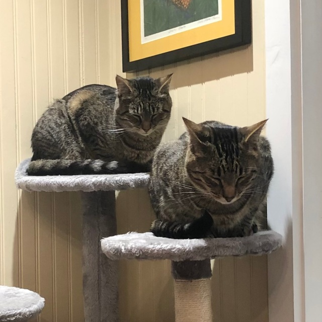 Two cats sitting in respectful meatloaf position with heads lowered
