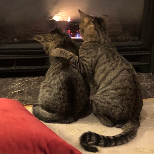 Two tabby cats sit with their backs to the fire, the larger with his paw around the shoulders of the smaller