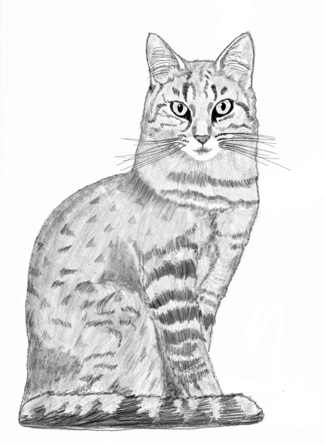 Digital sketch made to look like a pencil sketch of a tabby cat. He sits neatly, tail around his toes, in profile except for is head which is turned to stare directly at the viewer.